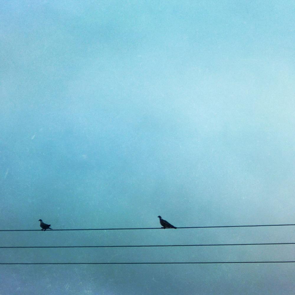 birds222